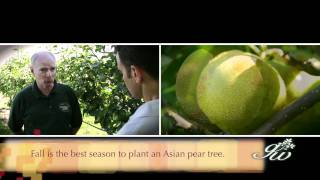 Learning about Asian Pears at Lookout Farm