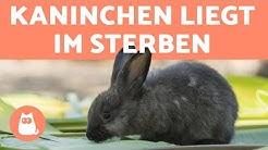5 Zeichen, dass euer Kaninchen stirbt