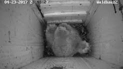 Waldkauz-Webcam: Eine Maus für die Kleinen