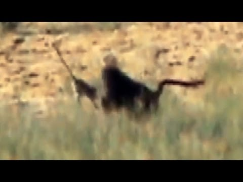 Baboons Killing Vervet Monkeys - 14 April 2012 - Latest Sightings