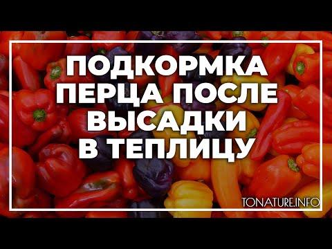 Подкормка перца после высадки в теплицу | toNature.Info