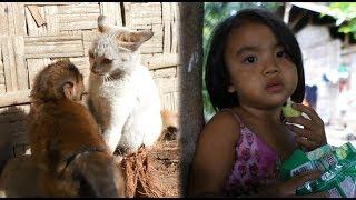 貧困家庭なホームステイ先/猫と猿が鉢合わせ/廃棄ヒヨコの嫁ぎ先【ドキュメント】