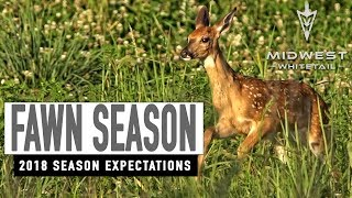 Fawn Season, 2018 Expectations | Midwest Whitetail