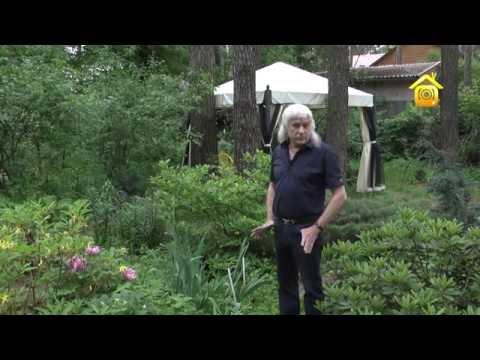 видео: Сад на лесном участке. Личный опыт // forumhouse