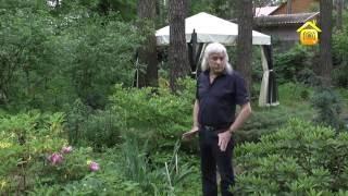 видео Деревья для лесного ландшафтного дизайна