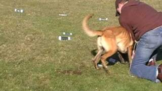 Video:training With Puzzles ( This Is Your Dog..this Is Your Dog With Drive.any Questions? )