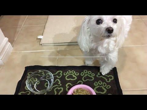 Instant Pot Healthy Chicken Dog Food