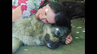 Кавказская овчарка. Домбай-Ульген Рабигат