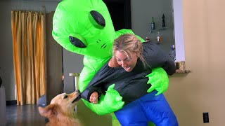 Gambar cover Dogs React to Owners Being Abducted by Aliens