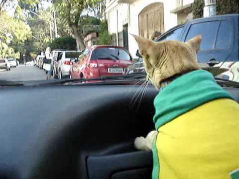 Oriental siamese cat driver Gato  オリエンタル  シャム  ねこ