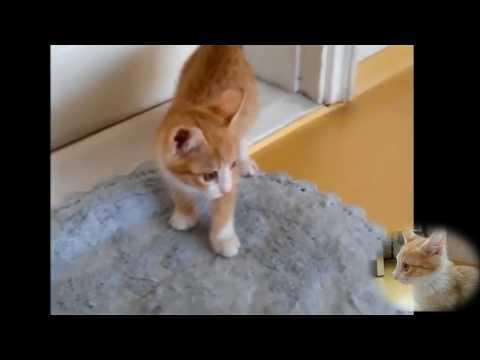 아기 고양이 재롱잔치 3편 Baby cat cute tricks ceremonial feast