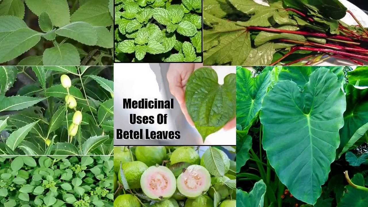 Top Benefits Of Tree's Leaves In Gujarati - YouTube