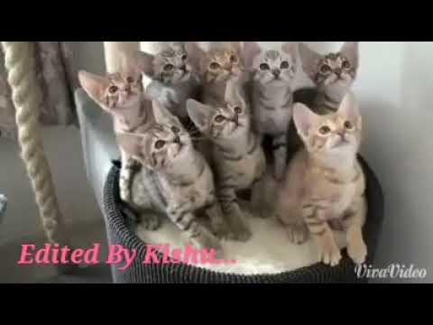 funny cats part 1(Too Funny ha ha )
