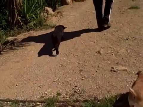 Rosie Abandoned Puppy