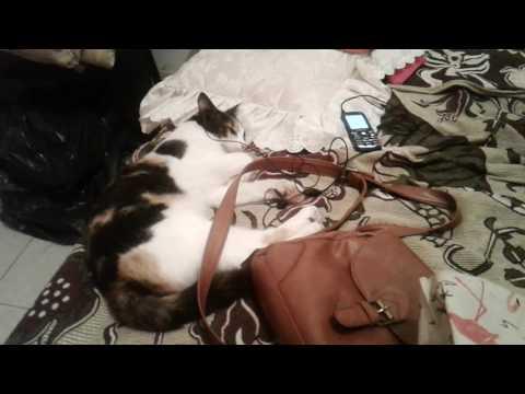El gato que le gusta la música