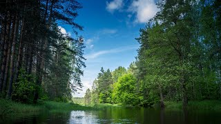 Сплав по реке Нерская. Московская область.