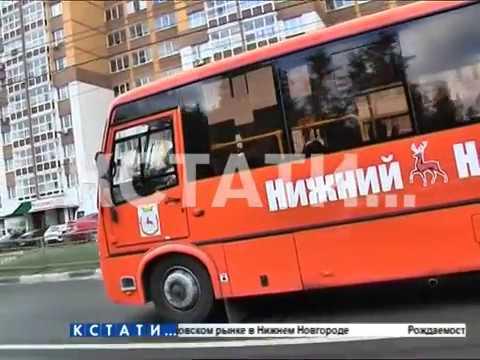 """Транспорт в законе  -  в нижегородской маршрутке появился """"авторитетный"""" пассажир"""