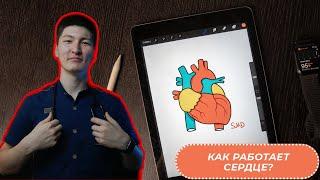 Как работает сердце? | Анатомия сердца | Медицина доступным языком
