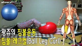 [왕쥬]짐볼운동 짐볼 레그컬 Ball Leg Curl 배워보자! How to do leg curl