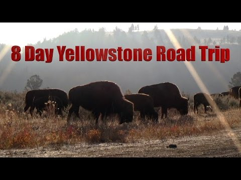 8 Day Yellowstone Road Trip - Amazing Landscapes and Wildlife