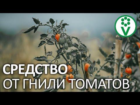 ВЕРШИННАЯ ГНИЛЬ БОЛЬШЕ НЕ ПОЯВИТСЯ! Лучший способ вылечить томаты!
