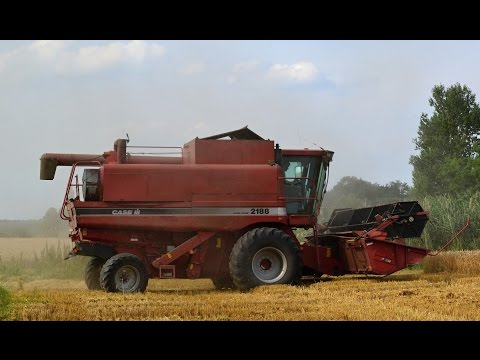 Wheat harvest 2016: old Case IH 2188 (sound)