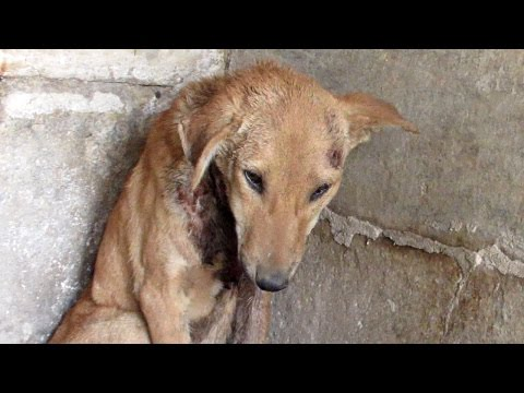 Prayers answered for injured puppy waiting for help in temple