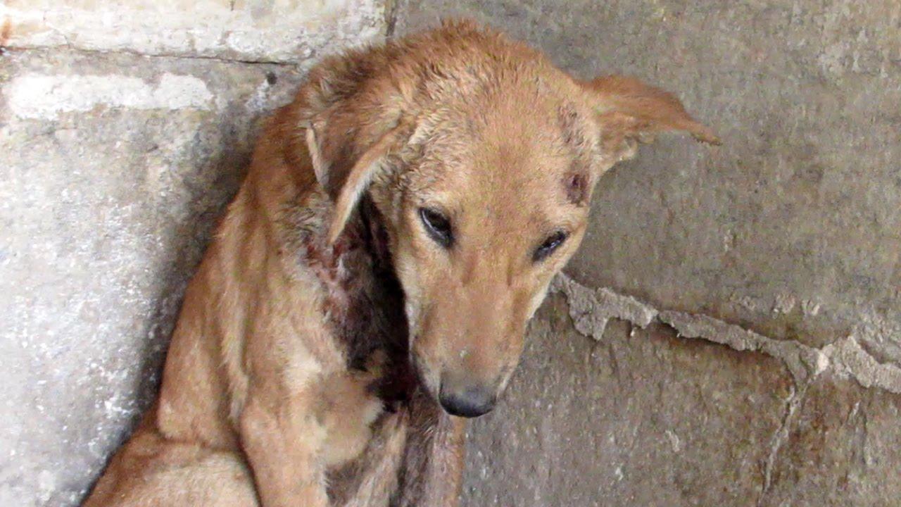 Helen Dog Rescue