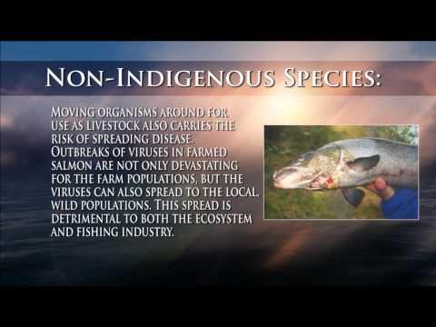 Aquaculture- Pros And Cons.wmv