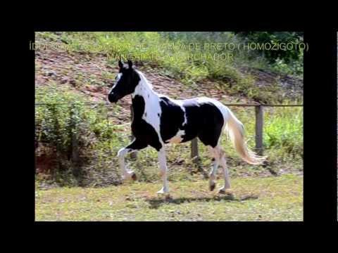 Monty roberts o encantador de cavalos no brasil