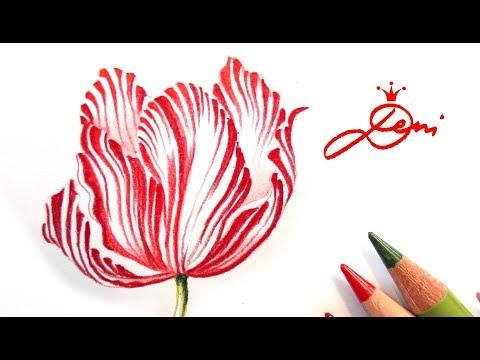 tulpe zeichnen anleitung
