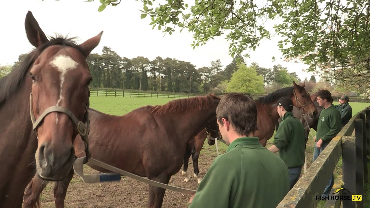 Irish National Stud: A Day In The Life Of An Irish National Stud Student