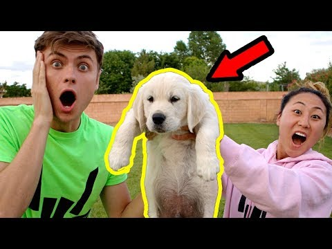 I SURPRISED MY CRUSH WITH A PUPPY!!