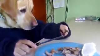 прикольная собака с человеком . приколы 2017 новое