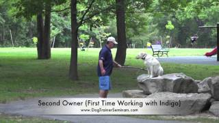 5-day Dog Training Seminar In Alexandria, Virginia! 3-year Old Lab! Amazing Dog Training