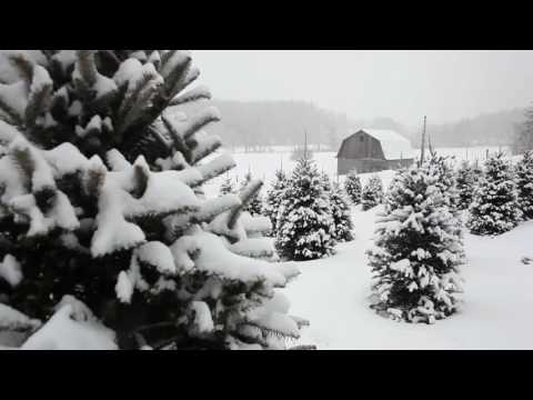[10 Hours] Snow Falling on Christmas Trees #1 Video & Audio [1080HD] SlowTV
