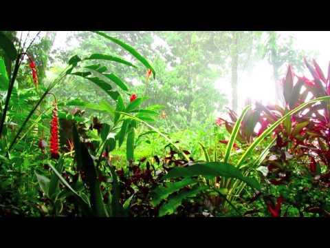 Rainforest Sounds of tropical rain - Nature Sounds #1, Costa Rica Slow Television Soundscapes