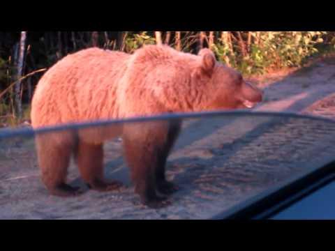 видео: Как мы медведя кормили