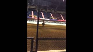 fort worth stock show rodeo aqha ranch riding