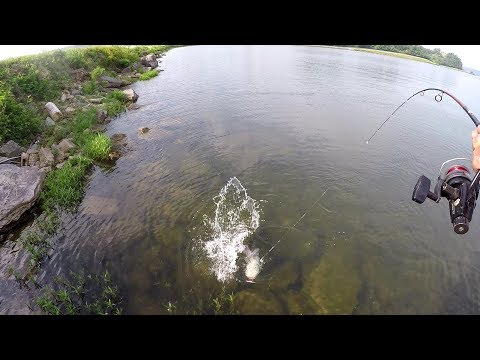 Catfishing With Bluegill From The Bank - Tips And Rig