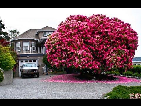 اجمل اشجار العالم واروعها The World S Most Beautiful And Splendid Trees Youtube
