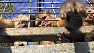 シロガオオマキザル,上海動物園,White-fronted capuchin,Shang Hai Zoo,China,中華人民共和国,白额卷尾猴,上海动物园