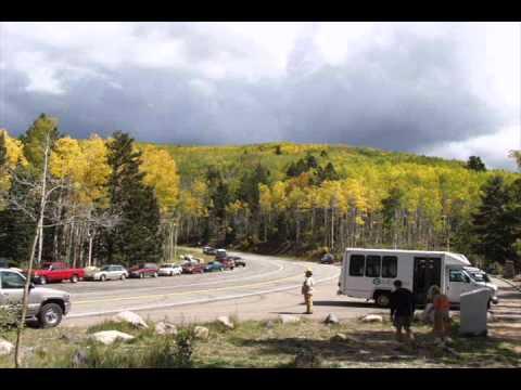 Santa Fe National Forest, aspens' leaves turn golden New Mexico NM