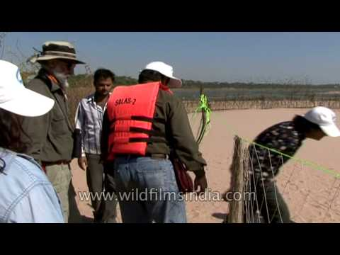 People visiting egg protection program site at National Chambal Sancturay