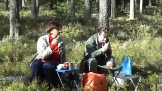 Под Приморском(Прездка на 29км. Приморского шоссе за ягодами и грибами., 2015-08-17T08:31:19.000Z)