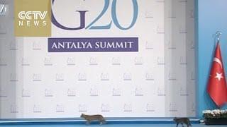 Cats break into G20 summit venue in Turkey