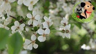 Аллергия у собак весной, основные симптомы и первая помощь