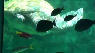 № 2344 США Беспалая Спасенная Черепаха в Sea World Orlando Florida