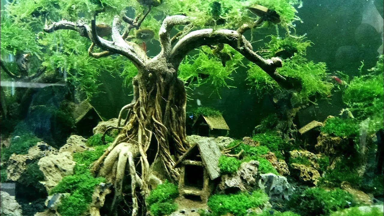 Aquascape Wood Aquascape Ideas