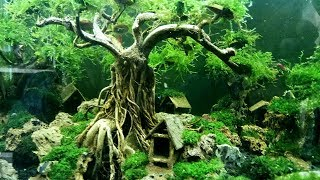 How to make underwater bonsai tree for aquascape decoration